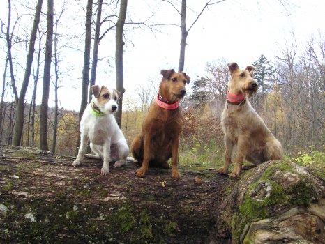 Rusty, Zorka a � rčanka Ema
