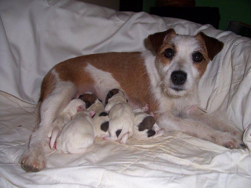 Mimi a jej šteniatka..sučka je zatiaľ celá biela
